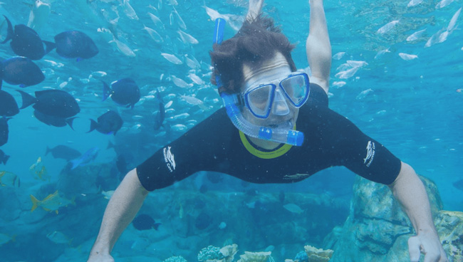 Khasab Musandam Snorkeling